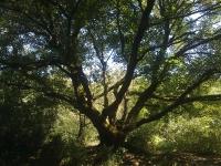 fosso-del-biscione-quercia