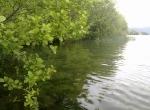 uno-scorcio-di-riva-lago-di-bracciano