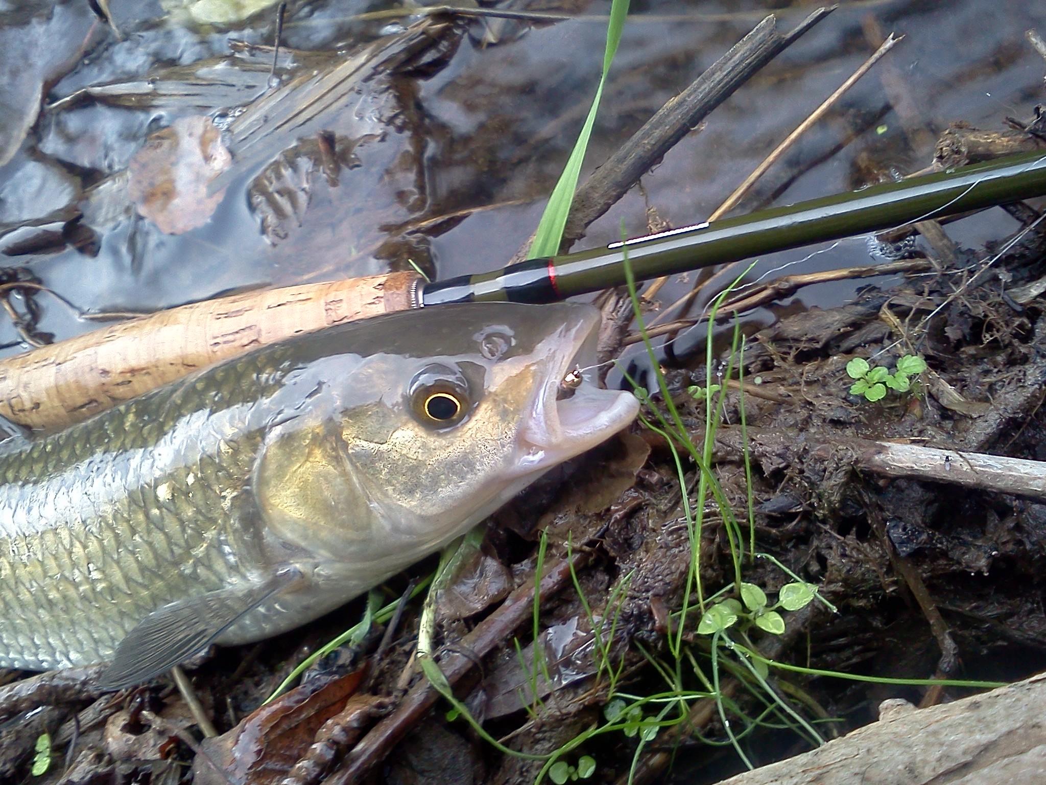 Pesca a ninfa sul Fiume treja